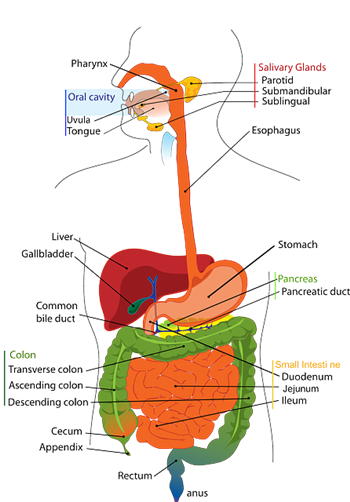 olivenbaumextrakt darmentzündung, olivenbaumextrakt lebensmittelunverträglichkeit, olivenbaumextrakt leber